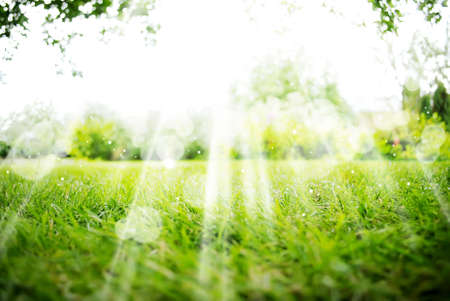 summer season: Background with Green Summer Landscape
