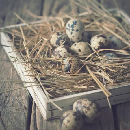 pastel colours: Tarjeta con codorniz Huevos de Pascua en un heno Colores Pastel Foto de archivo
