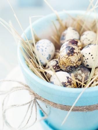 huevos de codorniz: Huevos de codorniz en el bote de color turquesa decorada para Pascua