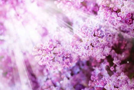 selective: Floral Spring Background with Lilac, selective focus