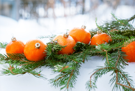 Tangerines as Fir-tree Toy on a Branch of Coniferous, White Snow photo