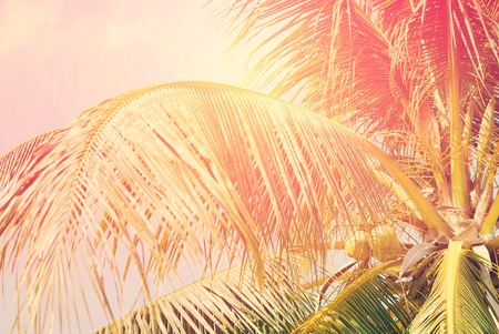 Coconut palm tree with Retro Filtered, as Background for Travel Holiday Cards