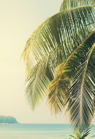 palm: Palm branches against the sea. Retro Filtered Stock Photo