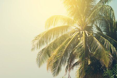 Palm Trees lit by the Sun on Tropical Beach. Toned  Background under Retro for Travel Design. Holiday Card