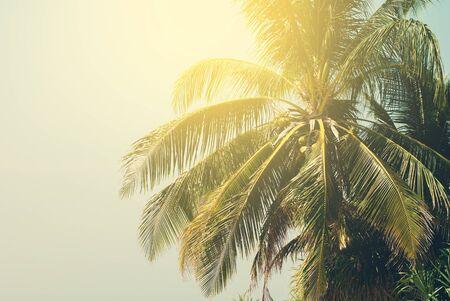 palms: Palmeras iluminadas por el sol en la playa tropical. Antecedentes virada bajo retro para el dise�o de viajes. Tarjeta de las vacaciones Foto de archivo