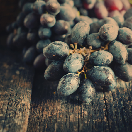 wine grapes: Cluster of Blue Grapes on Old Wooden Background. Vintage Style and Toned Image