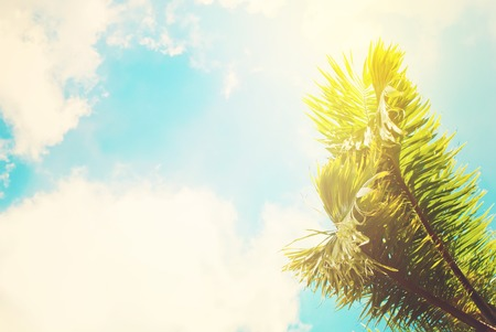 Two Leaves of Palm Trees on Blue Sky. Natural Background for Holiday Travel Card, Toned Effect