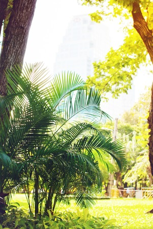 warm climate: Palm Bush in City Park. Natural Background Toned Warm and Brightly. Tropical Climate