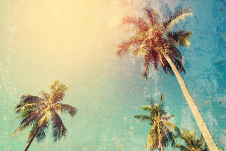 Tropical Background Palm Tree Sun Light Holiday Travel Design Toned Pastel Vintage Shabby Toned Effect Stock Photo