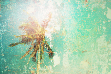 Tropical Background Palm Tree Sun Light Holiday Travel Design Toned Pastel Effect Vintage Shabby Toned