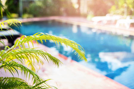 Beautiful Swimming Pool Tropical Resort Palm Tree Branches Phuket Thailand Blurred Background Toned Stok Fotoğraf