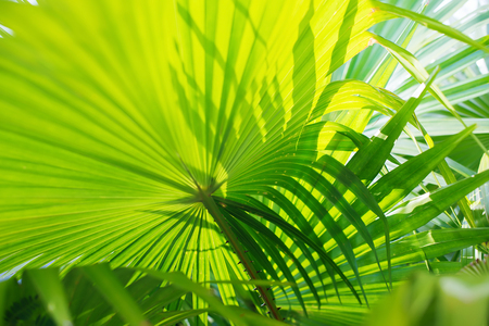 Tropical Palm Leafes Branches Sun Light Natural Background Stock Photo
