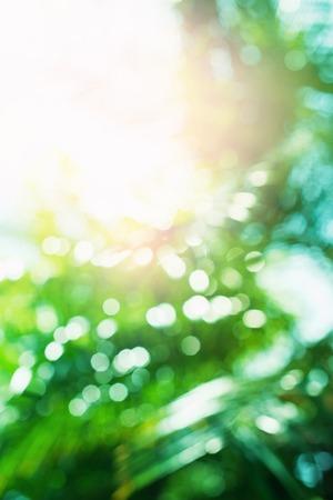 Palm Leaves Sun Light Hot Equator Nature Landscape Tropical Background Holiday Travel Design Bokeh Effect Background Stock Photo