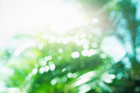 Palm Leaves Sun Light Hot Equator Nature Landscape Tropical Background Holiday Travel Design Defocused Bokeh Effect Background Stock fotó