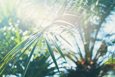 Sun Light Through Palm Branches Tropical Summer Background For Holiday Travel Design