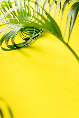 Variations Tropical Palm Leaves Yellow Background Flat Lay Top View Banner