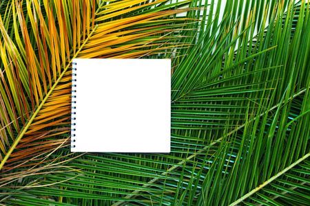 isolated note book on tropical palm leaves branches minimalism concept composition flat lay top view copy space