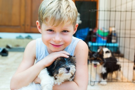 Happy caucasian boy lovingly embraces puppy purebred Biewer Yorkshire terrier pet Small size breed dog long wool Latin name Canis lupus familiaris Origin Germany. Decorative doggie Summer day