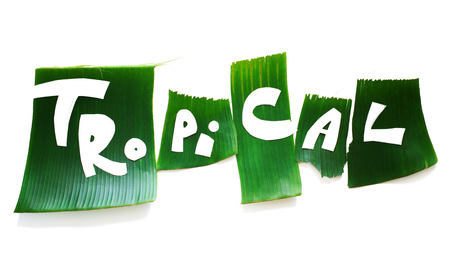 Stage of creation stencil. Word TROPICAL letters from green tropical palm leaves isolated on white. Original idea from natural material for summer design