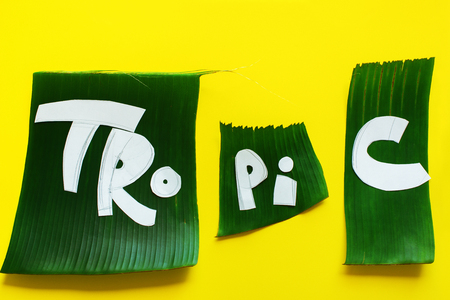 Stage of creation stencil. Word TROPICAL letters from green tropical palm leaves on yellow textured background.Original idea from natural material for summer design