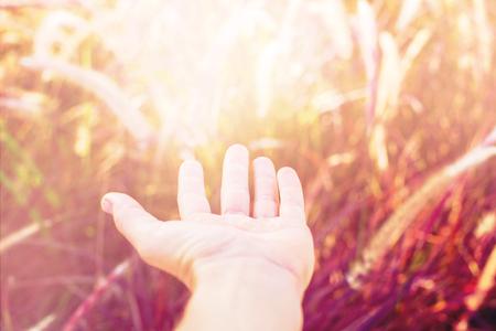 Palm touch nature. Morning light through summer gentle, fluffy, pink grass bokeh Natural