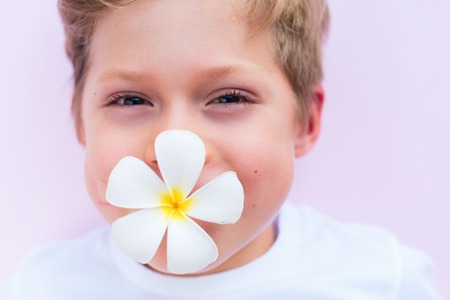 Little cute caucasian boy holding frangipani or plumeria flower in a mouth on pink background. Asian Songkran festival