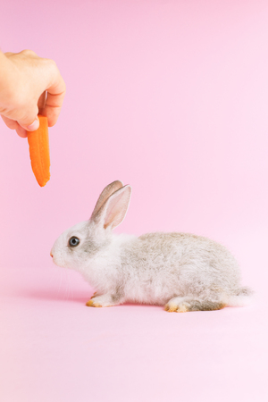 Little tame rabbit eating a carrot on pink