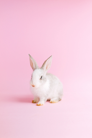 Little tame rabbit on pink 免版税图像