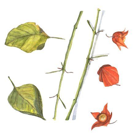 Ilustración Acuarela De Hojas De Colores Otoñales. Pintura Hecha A ...