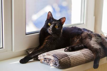 Black cat sitting on window sill and waiting for spring. Black cat lying on the windowsill.