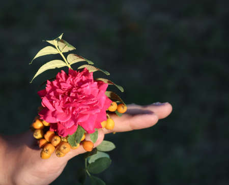 In the hand of a rose and an unripe Rowan.
