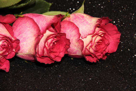Three pink roses on a black background with bokeh. Flower buds on a dark background with a sparkle.
