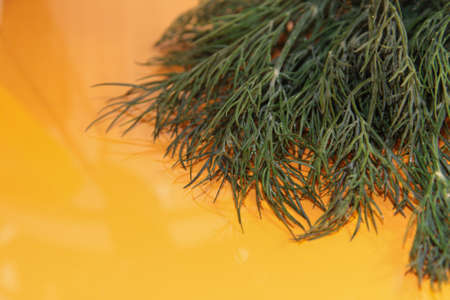 A bunch of dill on an orange table. Veggie food. Greens on a glossy table.