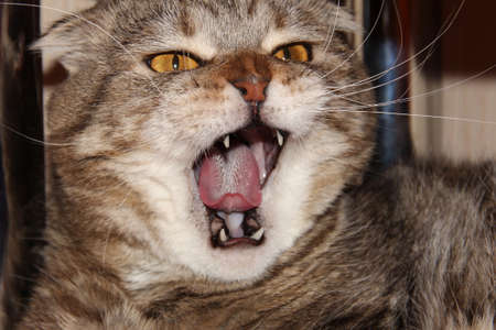 The cat yawns. The pet screams terribly.