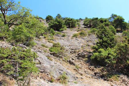 landscape of juniper on the mountain Zdjęcie Seryjne