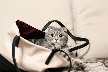 Cat sitting in a bag on a light background.