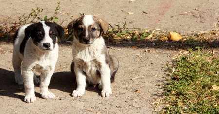 Two stray little puppies on the pavement. Reklamní fotografie