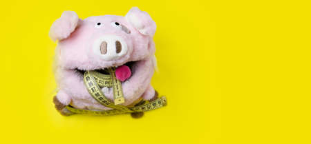 A pig eats a meter on a yellow background. Toy pig. 版權商用圖片