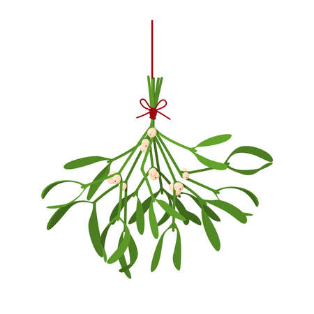 Christmas flower Mistletoe. Festive illustration with hanging sprigs of mistletoe with berries tied with a red thread isolated on white. Vector illustration