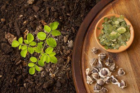 A Moringa seedling in soil, next to it moringa seeds and leaves on a brown table. Top view - Moringa Oleifera