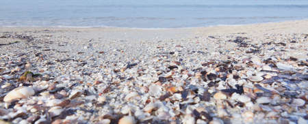 Close-up of beach with shells and sea sand, washed by small waves in the morning hours Banco de Imagens