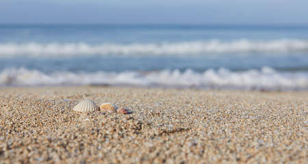 Close-up of beach with shells and sea sand, washed by small waves in the morning hours Banco de Imagens - 150646287