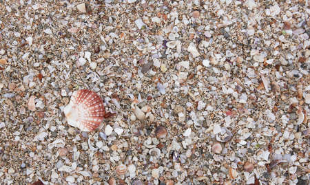 Close-up of the beach with shells and sea sand, in the morning hours