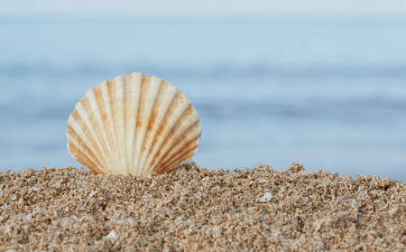 Close-up of the beach with shells and sea sand, in the background the sea and the sky, in the morning hours Banco de Imagens