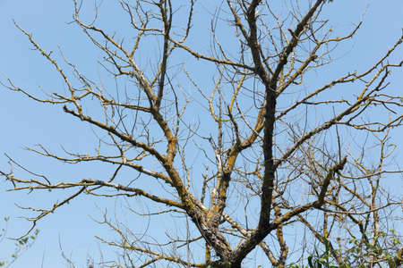 Elms without leaves, native trees of the Natural Park of s'Albufera