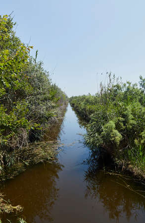 Irrigation canal in the S'albufera park, with its bank full of reeds, elms and in its waters, numerous fish and a great variety of birds