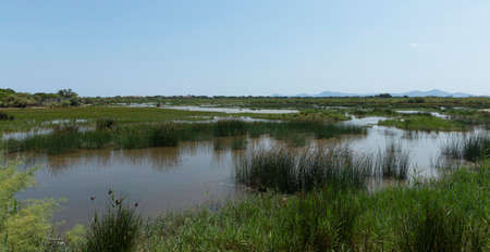 Wetlands in S'albufera, in this area, from various observation platforms, you have incredible views of the park, the Sierra de Tramuntana and you can observe birds among the vegetation. Banco de Imagens
