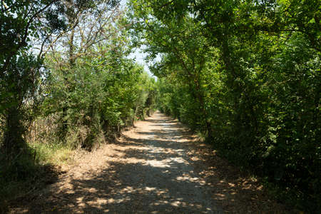 Enmig, a long road, within the Natural Park of s'Albufera, which previously communicated the town of Sa Pobla with the sea Banco de Imagens