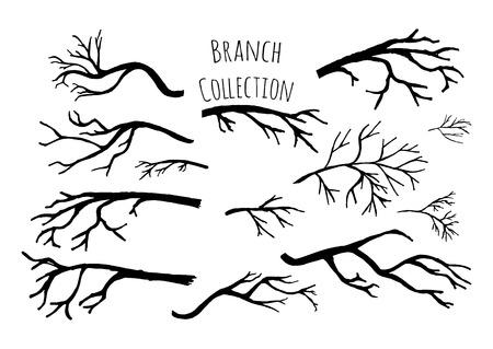 ramificación: Dibujado a mano colección de ramas de los árboles.