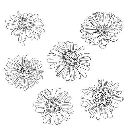 デイジー手描きスケッチ セット。ベクトル イラストレーション。